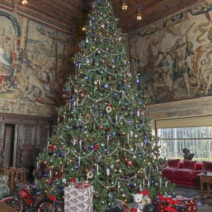 Christmas Tree in Assembly Room - Optimized