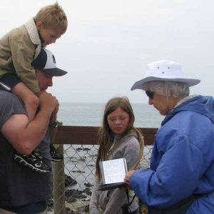 Polly Tatton, Elephant Seal Docent
