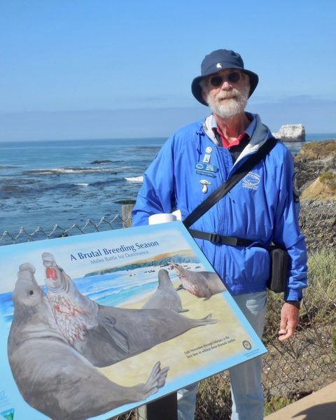 Rusty Moore, Elephant Seal Volunteer, San Simeon, CA